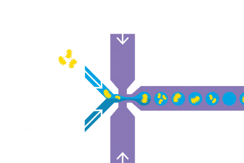 high-throughput cell encapsulation
