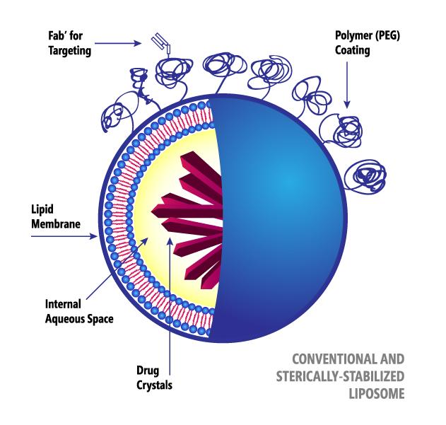 Liposome vescicular structure